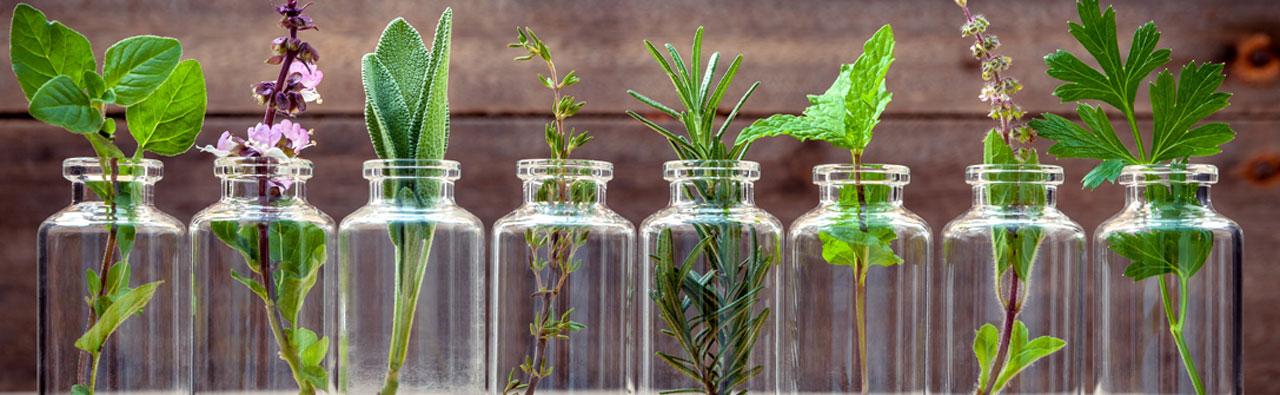 Aromatic & Medicinal Plants | Incredible